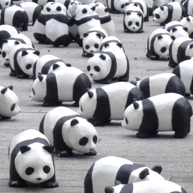 Pandas dupliqués